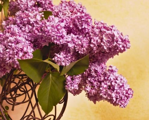 abrazate a las lilas